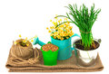 Gardening concept with grass, seeds, flowers, hank Royalty Free Stock Photo