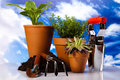 Gardening concept, work tools, plants Royalty Free Stock Photo