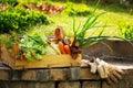 Gardening. Royalty Free Stock Photo