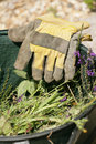 Gardening gloves Stock Photos