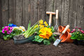 Gardening planting flowers in pot with dirt or soil at back yard Stock Image