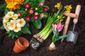 Gardening planting flowers in pot with dirt or soil at back yard Stock Photography