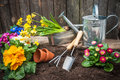 Gardening planting flowers in pot with dirt or soil at back yard Stock Photos