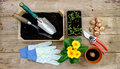 Gardening plants and seedlings and tools Royalty Free Stock Photo
