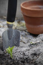 Gardening seedling being grown focus on the metal spade with a terracotta pot Royalty Free Stock Images