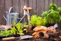 Gardening seedlings of lettuce with tools outside the potting shed Royalty Free Stock Photos