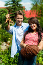 Gardening in summer - couple harvesting carrots Royalty Free Stock Photography