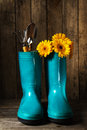 Gardening tools with blue rubber boots, yellow spring flowers on Royalty Free Stock Photo