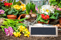 Gardening tools and flowers in the garden Stock Photo