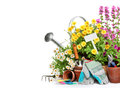 Gardening tools and flowers isolated on white Royalty Free Stock Image