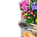 Gardening tools and flowers isolated on white with copy space Stock Photos