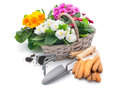 Gardening tools and flowers isolated on white with copy space Royalty Free Stock Images