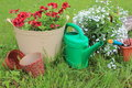 Gardening tools and flowers lobelia geranium Stock Image