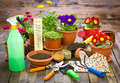 Gardening tools and flowers on the table Stock Images