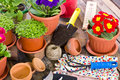 Gardening tools and flowers on the table Royalty Free Stock Photos