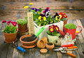 Gardening tools and flowers on the table Royalty Free Stock Photo