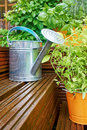 Gardening tools on garden terrace Royalty Free Stock Image