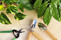 Gardening tools and houseplants Royalty Free Stock Images