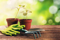 gardening tools and plants on old wooden table Royalty Free Stock Photo