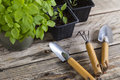 Gardening tools with plants in pots Royalty Free Stock Photo