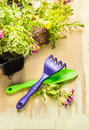 Gardening tools scoop and rake with ground cover plant close up Stock Photos