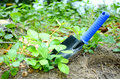 Gardening tools a small shovel with blue handle Royalty Free Stock Photos