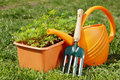 Gardening tools with watering can and a box of seedling Royalty Free Stock Photo