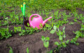 Gardening tools, watering can, plants and soil Royalty Free Stock Photo