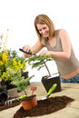 Gardening - woman trimming bonsai tree Royalty Free Stock Photo