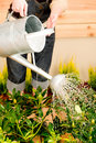 Gardening woman watering plant spring terrace Royalty Free Stock Photo