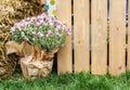 Gardening, wood fence in green spring garden