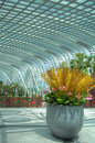 Gardens by the Bay, Flower Dome: Chinese New Year Stock Images