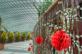 Gardens by the Bay, Flower Dome: Chinese New Year Stock Photos