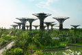 Gardens by the bay singapore with supertrees artificial supertree grove as a vertical Stock Image