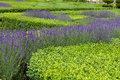 Gardens with the flourishing lavender at castles in valley of loire Stock Photos