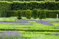 Gardens with the flourishing lavender at castles in valley of loire Royalty Free Stock Photos