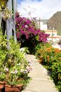 Gardens and plants in la calera lovely little village with flowers on gomera canary islands gomera is one of the most beautiful Royalty Free Stock Photos