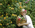 Gardner with straw hat and roses in basket Stock Image
