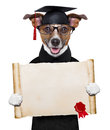 Garduate dog happy graduate holding a big diploma beside a banner Stock Images