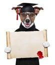 Garduate dog Royalty Free Stock Photo
