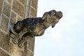 Gargoyle gothic church architectural detail details Royalty Free Stock Images