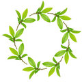 Garland of Bay Leaves Stock Photo