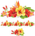 Garland of tropical flowers hibiscus and plumeria Royalty Free Stock Images
