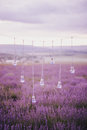 Garland with vases in shape of a light bulbs in a lavender field hand made Royalty Free Stock Photo