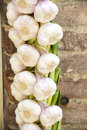 Garlic braid fresh hanging on a wall of a house in tuscany italy Royalty Free Stock Photos