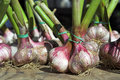 Garlic bunch Royalty Free Stock Photos