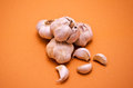 Garlic foreground colored background Stock Photos