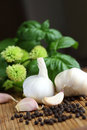 Garlic, peppercorns and basil Stock Image