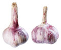 Garlic seasoning ingredient white fresh food healthy vegetable spice organic bulb isolated root raw object condiment closeup herb Royalty Free Stock Photography
