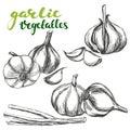 Garlic vegetable set hand drawn vector illustration realistic sketch